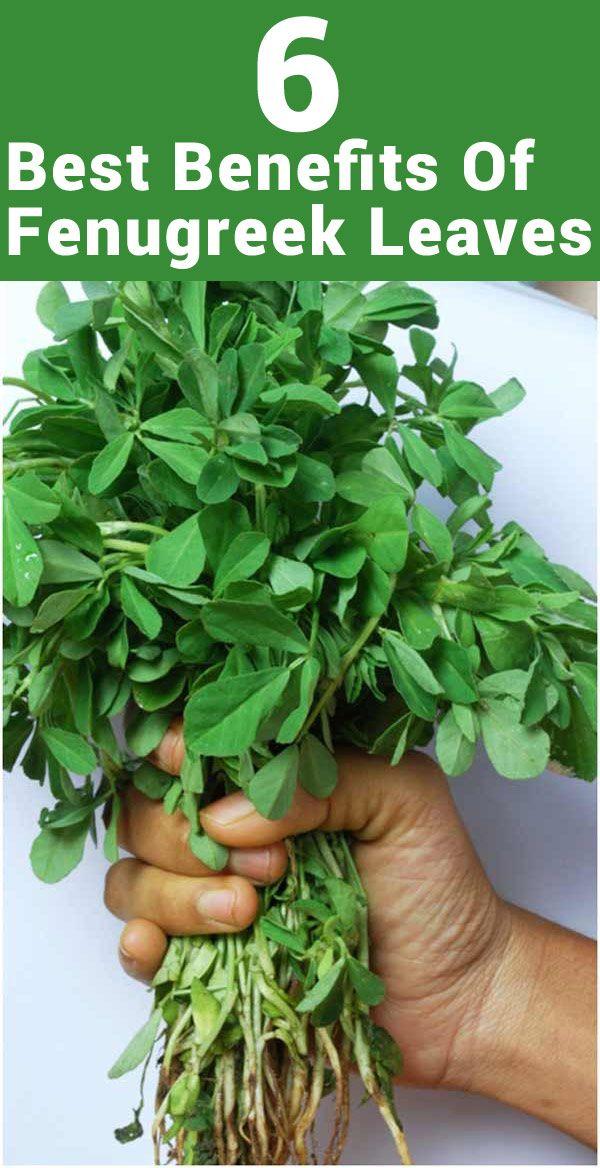 48 Amazing Health Benefits of Methi (Fenugreek) Seeds ...