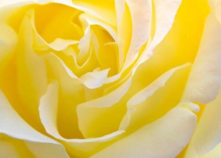 yellow art - Google Search