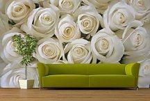 fototapety - biele ruže
