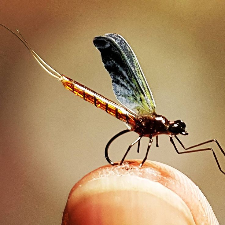 Newlie emerged, drying it's wings on a Partridge Klinkhamer size 20 #deercreekproteam #deercreekresin #deercreekflies #mayfly #flytying #flugbindning #artfly #partridgehooks #fluebinding #flue #flytyer #flykipedia #thumbsup