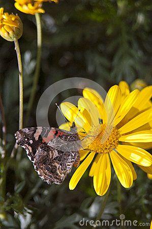 Mariposa En Una Flor - Descarga De Over 32 Millones de fotos de alta calidad e imágenes Vectores% ee%. Inscríbete GRATIS hoy. Imagen: 34430931