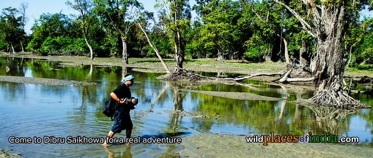 Come with us to Dibru Saikhowa for a real adventure. Time to go is now!  http://wildplacesofindia.com/dibru-saikhowa-national-park.html