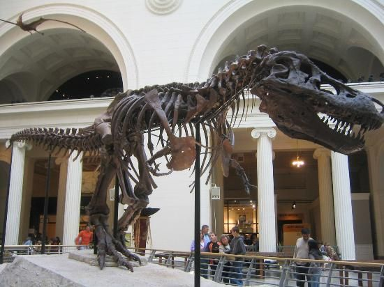 Sue at the Field Museum Chicago Tourism and Vacations: 762 Things to Do in Chicago, IL | TripAdvisor