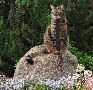#cat wearing a #beautiful #gagarin #necktie