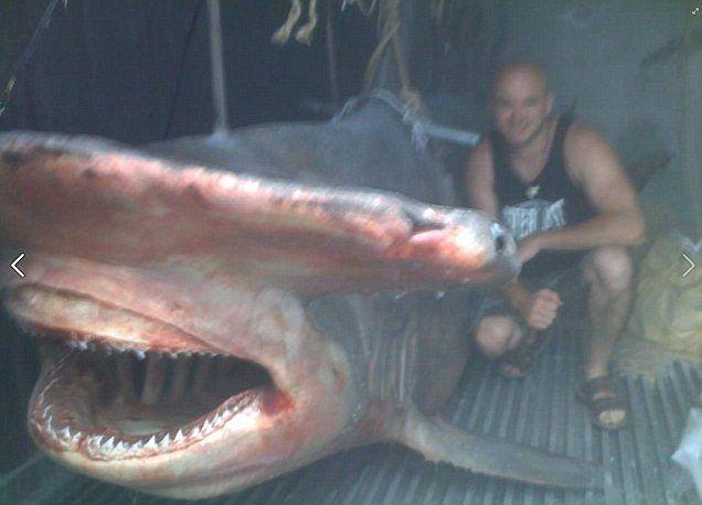 Fisherman poses on boat with massive 17ft hammerhead shark ...