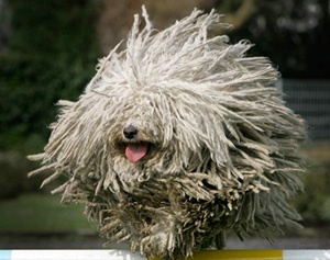 @Hannah Ohlin can we get this mop oh I mean dog for our apartment? Ahahaha
