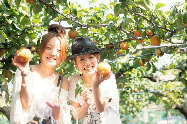 Enjoy Fruit Picking Around Tokyo