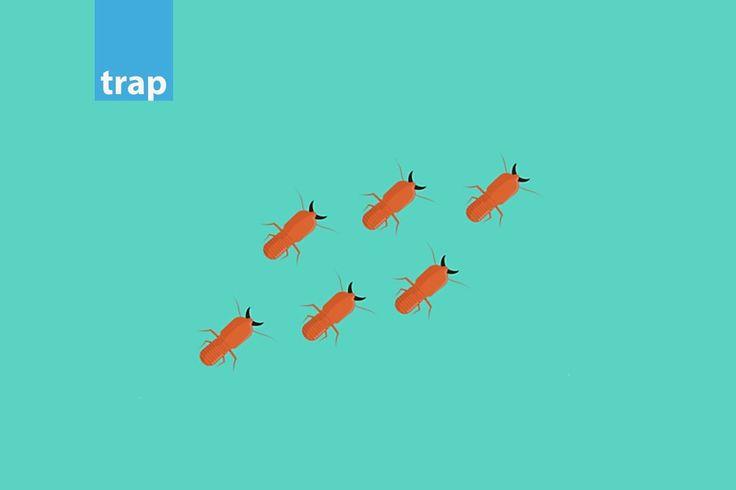 termites-xylou-trap.jpg (1080×720)