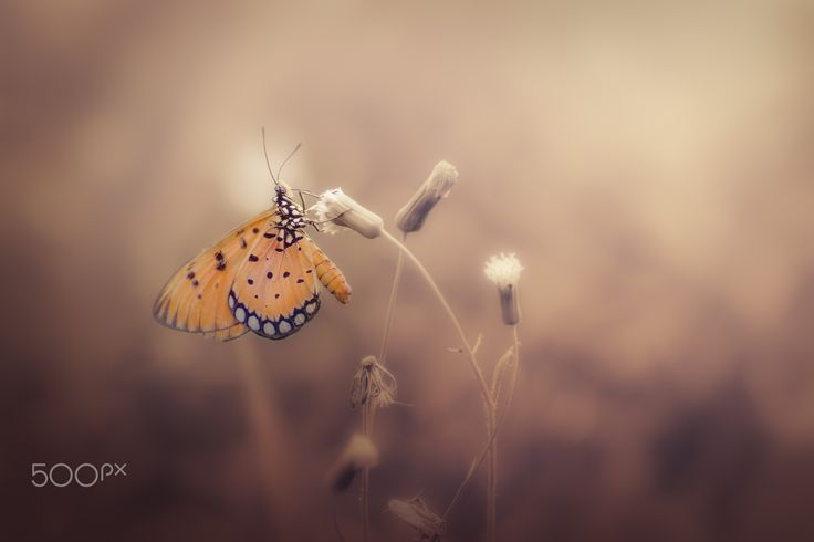 Take a rest - Butterfly