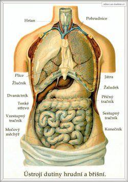 Příznaky oslabení orgánů | Tianshivk