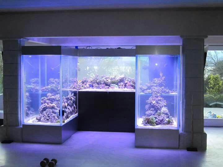 Wall tank reef saltwater tank aquarien pinterest for Saltwater aquarium fish for sale
