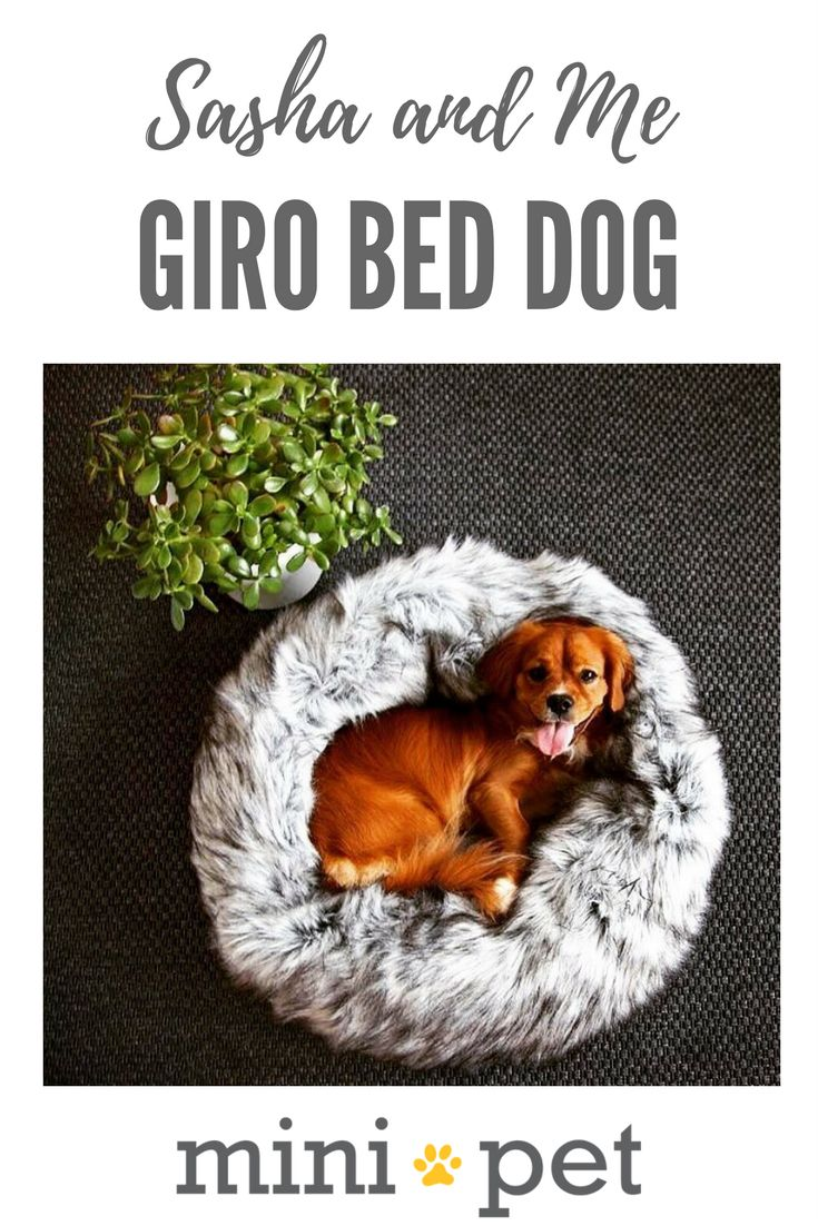 The funky luxurious look and feel, gives the bed that special something.  Feeling the cold? On our Giro beds your best friend will rest and sleep heavenly. Material: Fake faux fur with a very soft and luxurious feel and yet is robust and easy to clean. Inserts are filled with 100% PET fiber, which is derived from recycled water bottles. They look and feel similar to a high-grade polyester cushion insert, but have a greater resilience rating and will last for much longer.