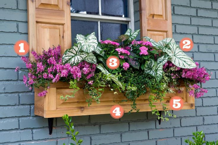 Don't let sweltering temps get you down! Plant these heat-tolerantblooms for colorful curb appeal all summer long.