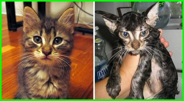 Gambar Kucing Fanny godean.web.id