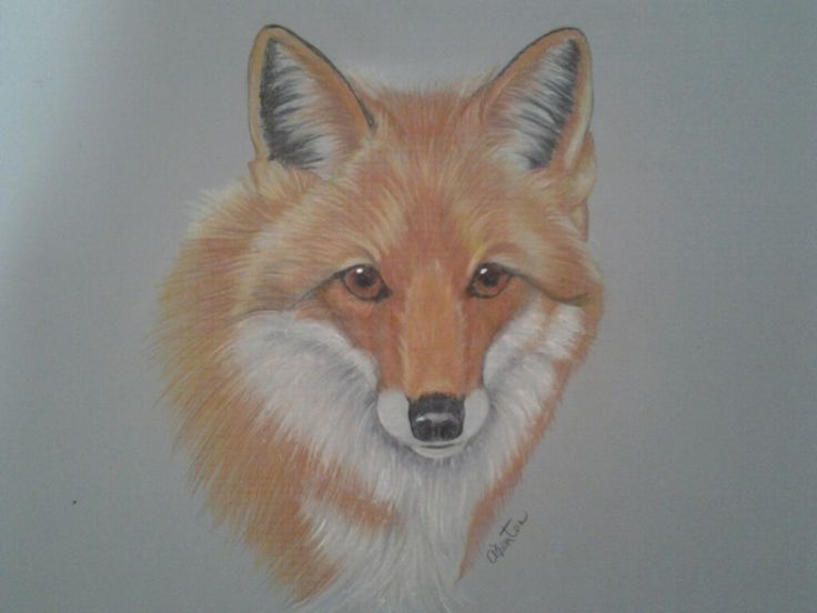 Red Fox ... Prisma Pencils