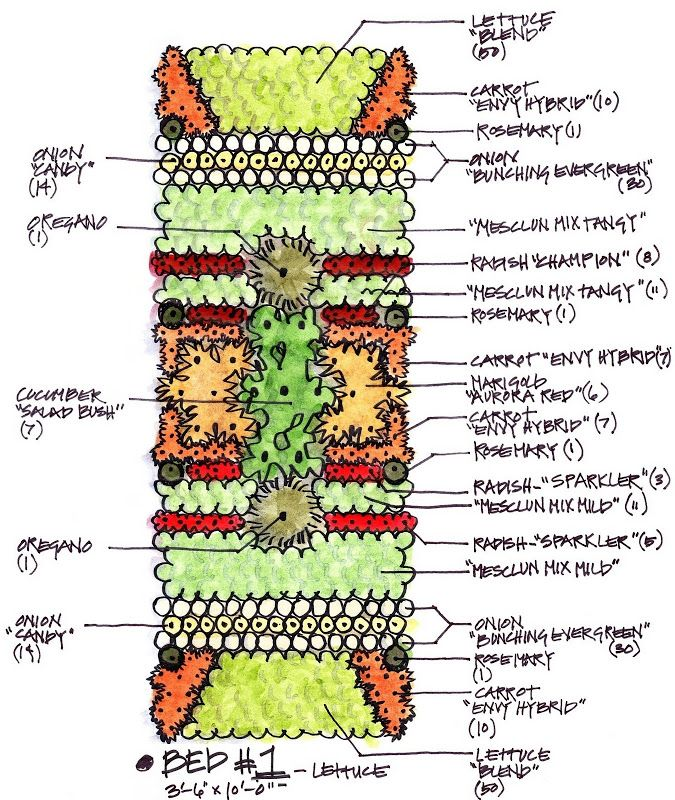 Companion gardening layout #1
