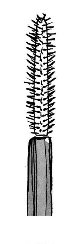 7 видов кисточек для туши: как в них разобраться? — Модно / Nemodno