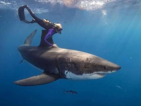 Talk about extreme sport! Free diving with a great white shark: Camille de Vitry. Don't try this at home.