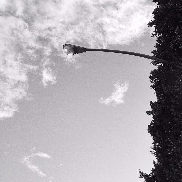 Light and tree!