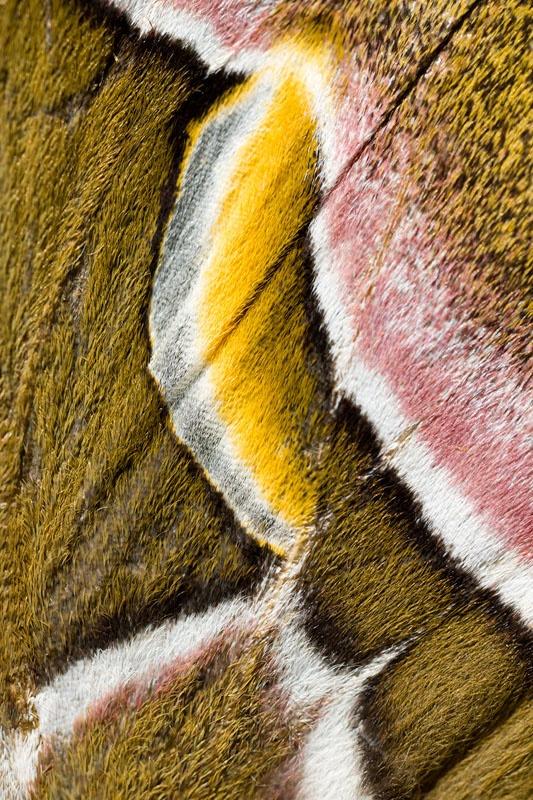 photographer, Dan Brown ~ detail of a velvety moth wing