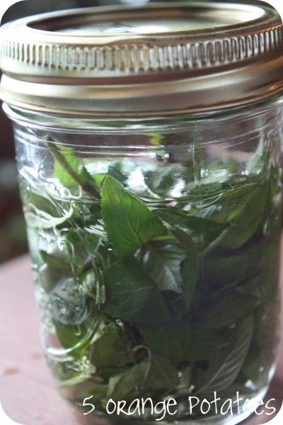 Homemade Peppermint Extract (among other things, peppermint is great for people who get anxiety attacks and upset stomachs: it alleviates both).