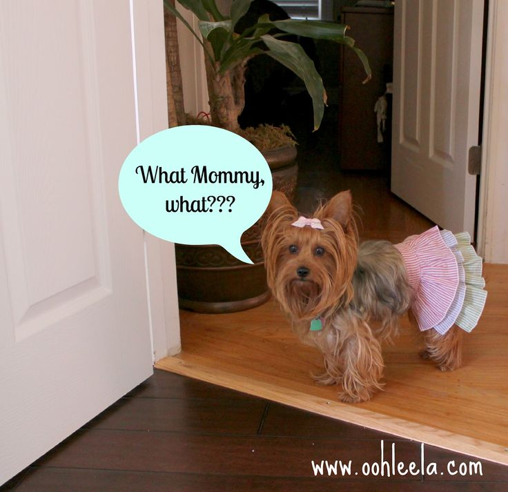 What, mommy, what?!!  What's for dinner? All natural dog ice cream recipe