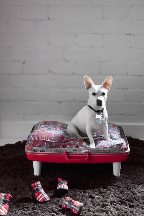 DIY Project: Vintage Suitcase Dog Bed