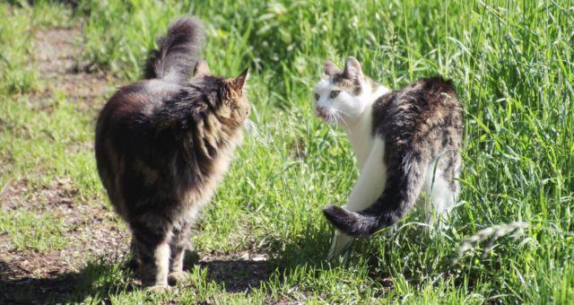 Pin Auf Katzen