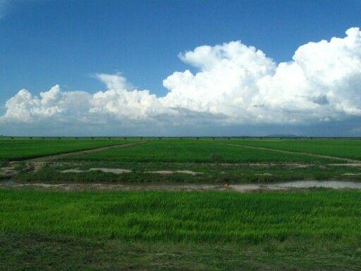 Paddy field, Perak, Malaysia