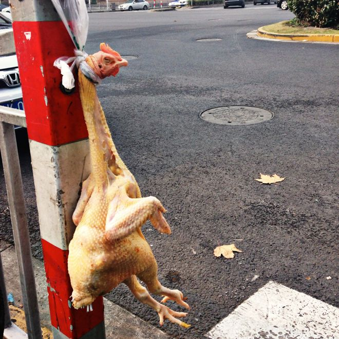 This is one of the many weird things you might spot on the roadside in Shanghai. But there is a way to process these odd sights and experiences without getting upset, says suitcases&strollers mum @tatemh. Check out her wise word in our latest travel story about the Chinese city at http://www.suitcasesandstrollers.com/interviews/view/china-with-kids-shanghai-insider?l=all #GoogleUs #suitcasesandstrollers #travel #travelwithkids #familytravel #familytraveltips #traveltips #chicken
