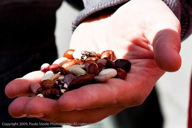 Magic Beans: Magic Beans, Do You, Fun, Naughty Fairy, Unicorns