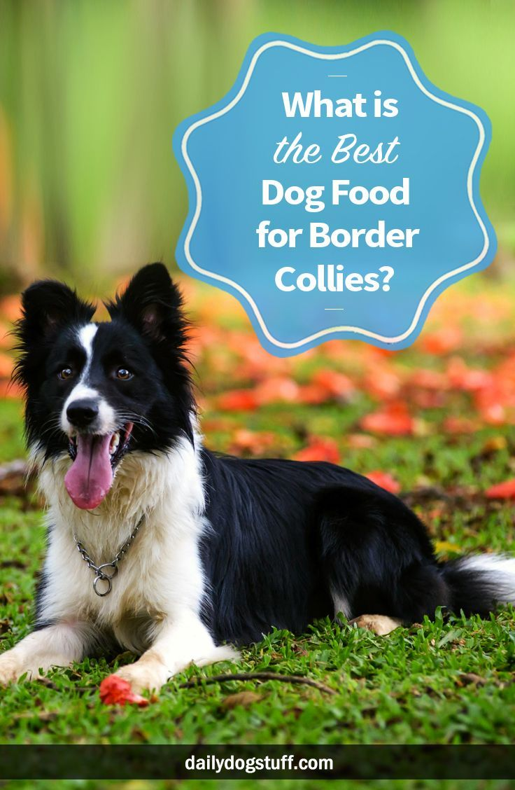What Is The Best Dog Food For Border Collies Best Dog Food