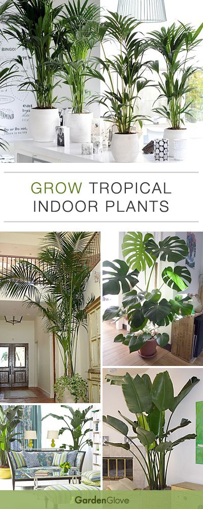 Grow Tropical Indoor Plants • Helpful Tips Ideas!
