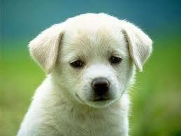 de un hermoso perro