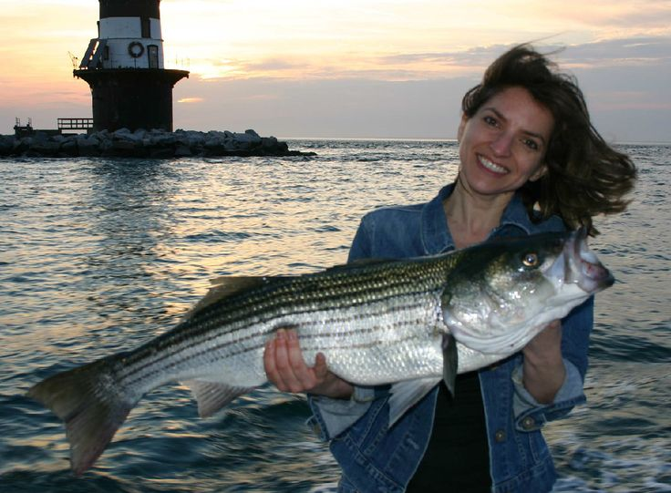315 best images about striped bass pics on pinterest for Montauk fishing charters