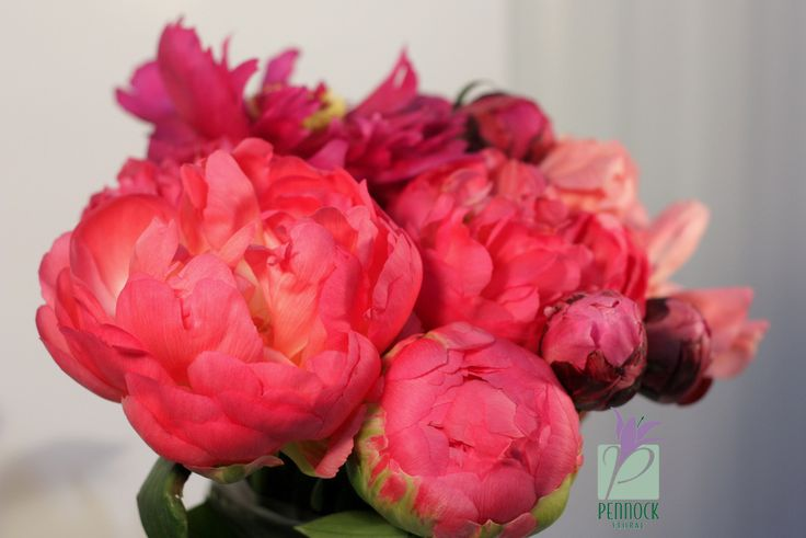 pictures of peonies flowers | Flower of the Month – Peony | Pennock Floral