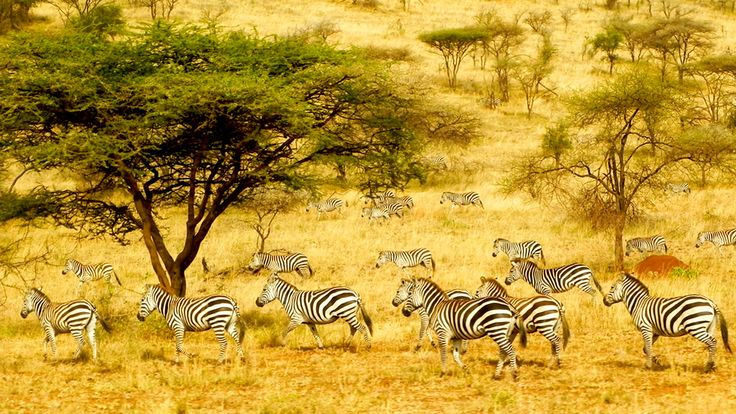 Africa travel destinations - the place where you can find more than you think. Whereas this period has an absolute notoriety, as regards the