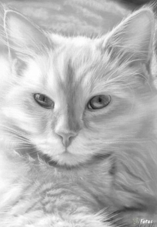 106 best Coloring pages cats images on Pinterest Coloring