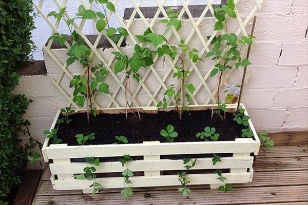 91 besten garten erdbeeren pflanzen bilder auf pinterest erdbeeren pflanzen erdbeeren und. Black Bedroom Furniture Sets. Home Design Ideas