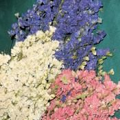 CHEAPER AND YOU GET MORE...  Dried Larkspur Flowers For Sale