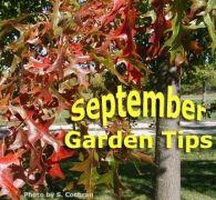 Sligo Today News - September Gardening Tips