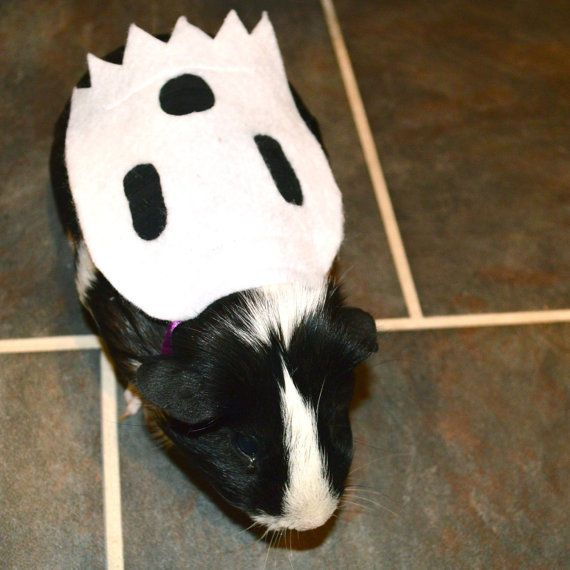 1000 ideas about pig costumes on pinterest pig ears for Homemade guinea pig