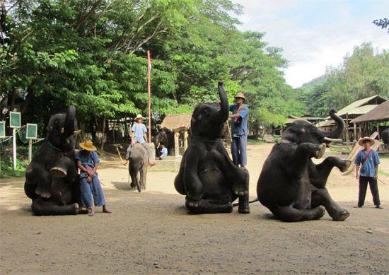 El elefante asiático en peligro: http://www.guiarte.com/noticias/turismo-faada-elefante-asiatico-2014.html