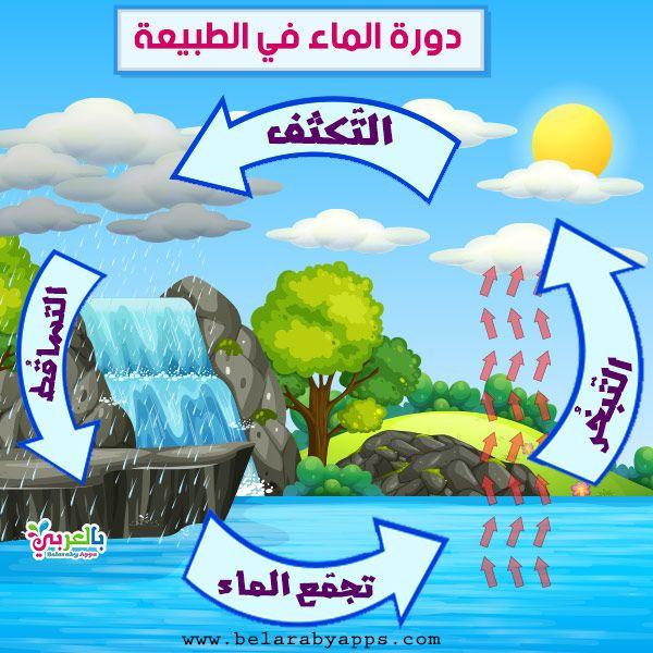 رسومات عن دورة الماء في الطبيعة للاطفال رسم تعليمي بالعربي نتعلم Arabic Kids Free Prints Butterfly Life Cycle