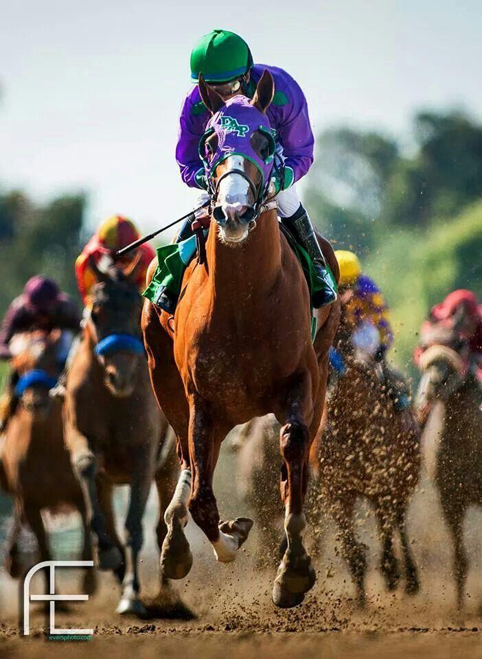 Preakness Stakes Winner California Chrome 5/17/2014