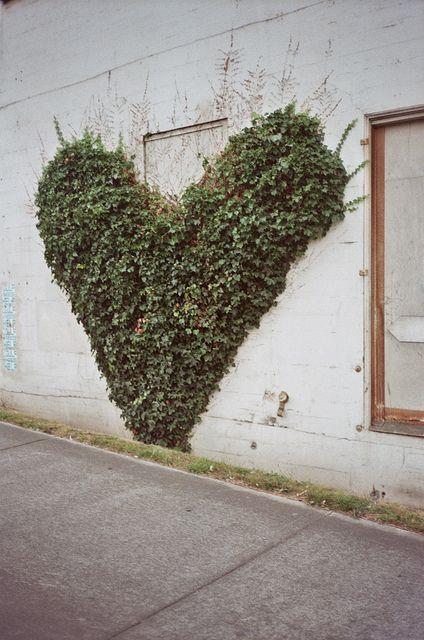 ivy.: Living Wall, Vines, Green Wall, Heart Shape, Street Art, Spring Collection, Gardens, Natural, Ivy Heart