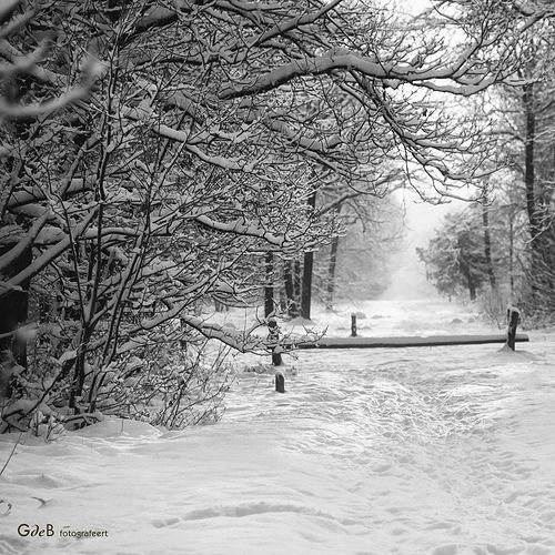 winter view | winter zicht