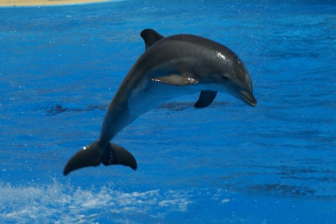 Dolphins at Glenmore Beach in Glenmore, KwaZulu-Natal