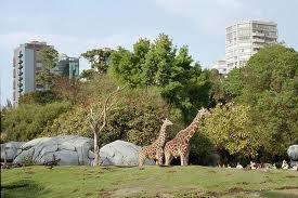Zoológico de Chapultepec México DF