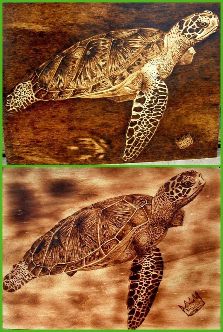 Gemütlich Süsse Baby Schildkröte Malvorlagen Dragoart Fotos ...